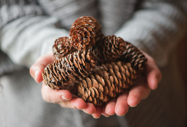 Human hands with pine cones Celebration Christmas Decor Holiday New Year Pinecones Winter Background Backgrounds Close-up Cone Cones Day Decoration Focus On Foreground Gray Background Holding Human Body Part Human Hand Indoors  One Person People Pine Cone Pinecone Real People