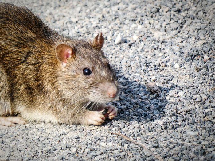 Portrait of squirrel eating