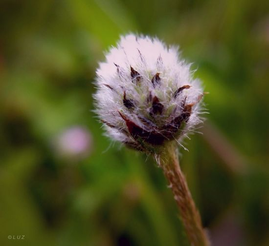 Macro Spring Flowers Simplicity Nature_collection