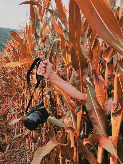 Full frame shot of leaves on field during autumn