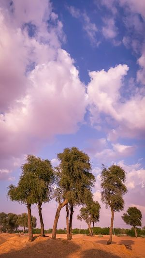 Tree Cloud - Sky Sky Plant Beauty In Nature Landscape Field Land Nature No People Day Outdoors