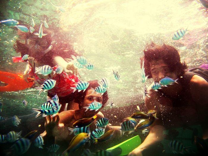 Me Friends Underwater Park Sea