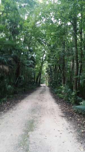 Tree Nature Forest The Way Forward Day Outdoors Tranquility Growth Beauty In Nature No People Scenics Florida Trail