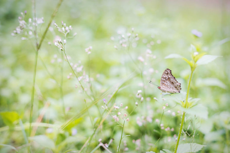 butterfly One