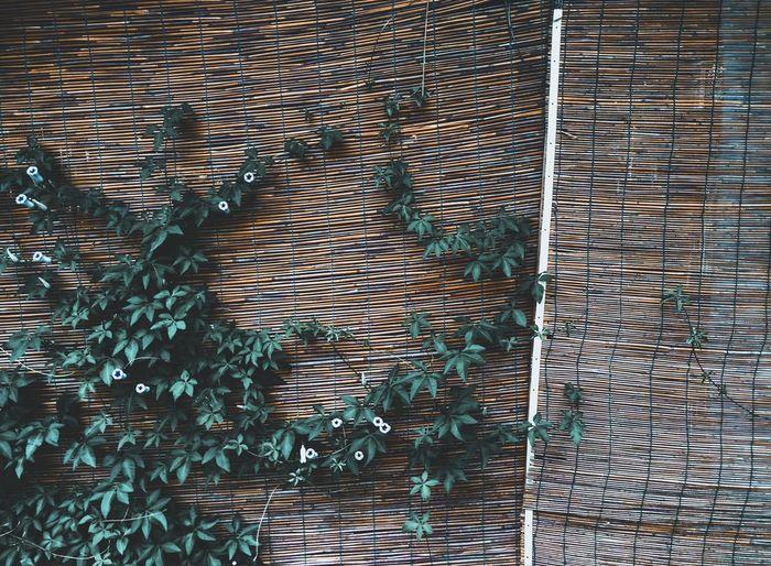 花 Backgrounds Full Frame Pattern Textured  Refraction Close-up Peacock Crisscross Pixelated Rippled Artificial Intelligence Mother Board Seamless Pattern Ocean Graphical User Interface Waterfront Calm Computer Chip Swan Fanned Out Abstract Backgrounds Feather  Cursor Grid Animal Crest Blooming Peacock Feather Intricacy Leaf Vein