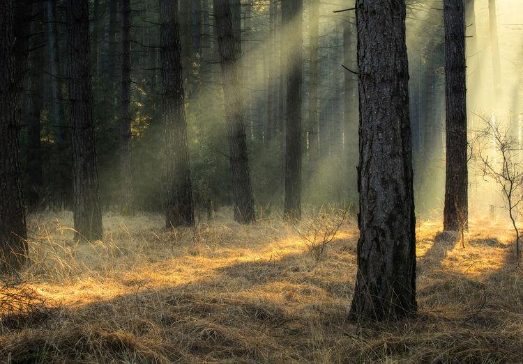 Beautiful rays