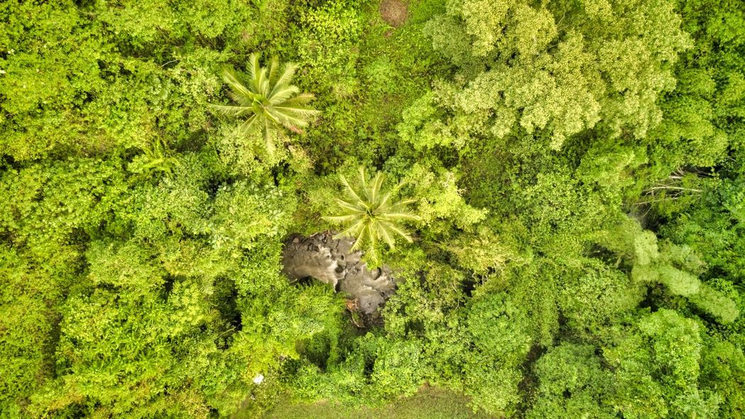 Aerial shot of the trees in Ubud Beauty In Nature Tranquility Tree Plant Land No People Green Color Nature Growth Foliage High Angle View Outdoors Bali Ubud, Bali Campuhan Ridge Walk Leaf Plant Part Freshness Day Lush Foliage Full Frame Forest Field