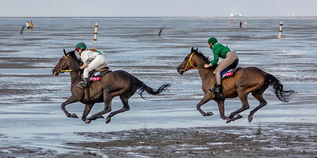 Animal Animal Themes At The Beach Galope Race Horse Horses Horses And Jockeys Sports Photography
