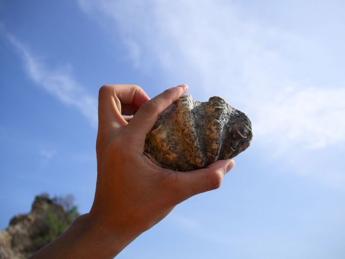 Close-Up Of Human Hand Holding Seashell At Beach Against Sky