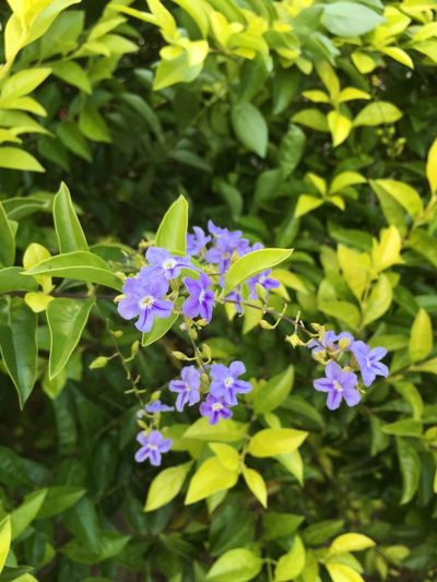 Flower Flowering Plant Plant Freshness Beauty In Nature Growth Fragility