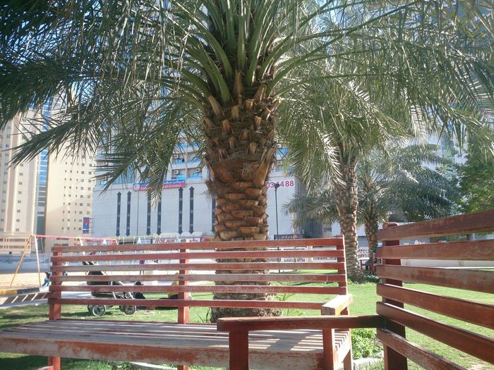 Hz339 Palm Park Shj UAE Green Palm Tree Tree I Was There