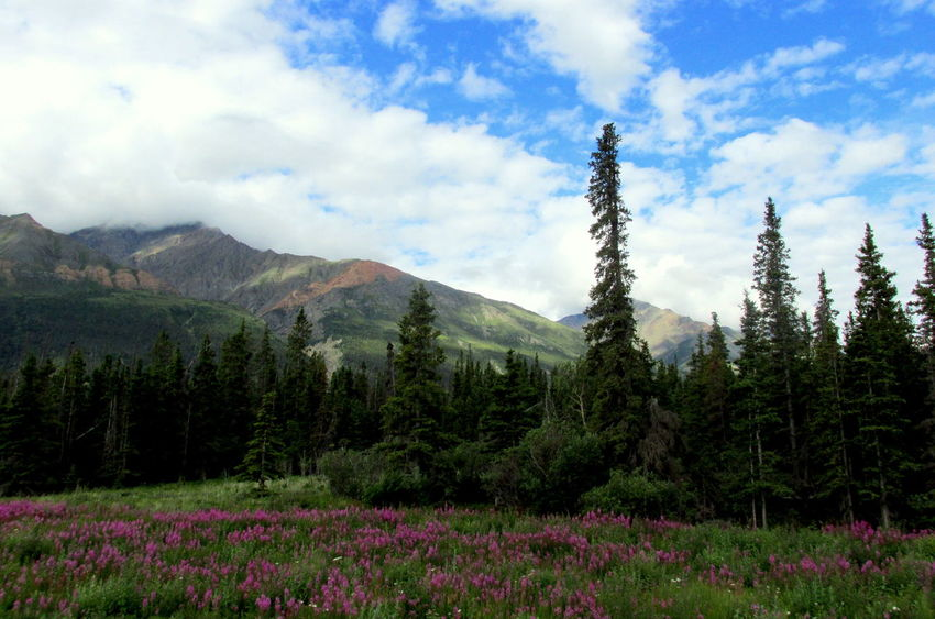 Beauty In Nature Cloud - Sky Day Environment Land Mountain Nature No People Outdoors Purple Wildflowers Scenics - Nature