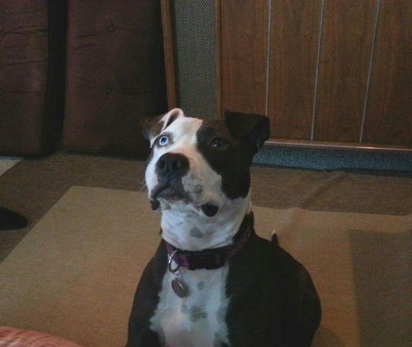 Portrait of dog sitting