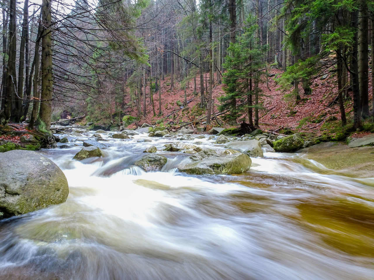 flowing water, nature, forest, tree, beauty in nature, scenics, no people, water, day, waterfall, outdoors, river, blurred motion, tranquil scene, long exposure, tranquility, motion
