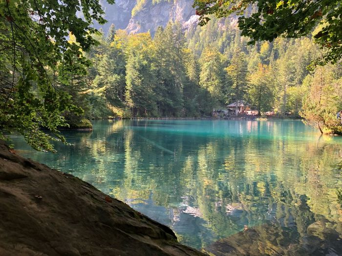 Blue Lake Horizon Nofilter Kandergrund Bluelake Switzerland 🇨🇭 Swissbeauty Water Tree Plant Beauty In Nature Lake Reflection Tranquility Scenics - Nature Nature Tranquil Scene Day Idyllic Non-urban Scene Outdoors Forest