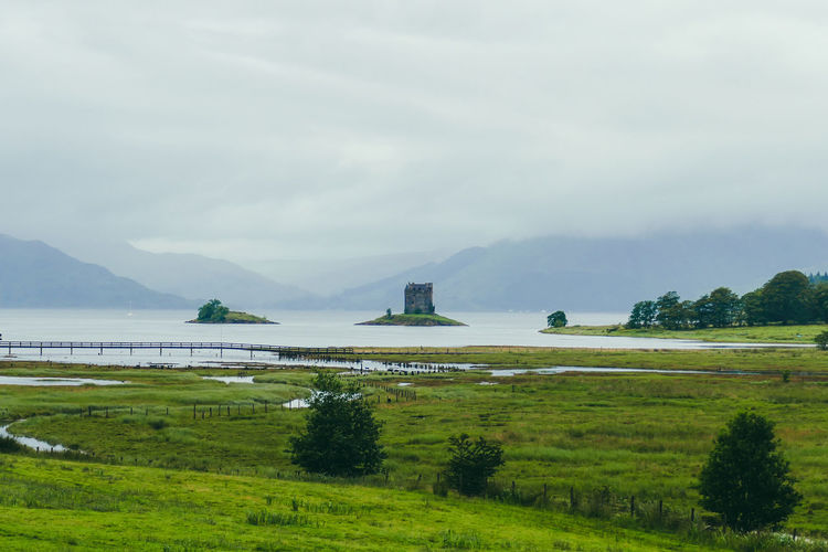 Loch Linnhe Loch  Castle Stalker Argyll Argyll And Bute Scotland Highlands Highland Cattle Water Mountain