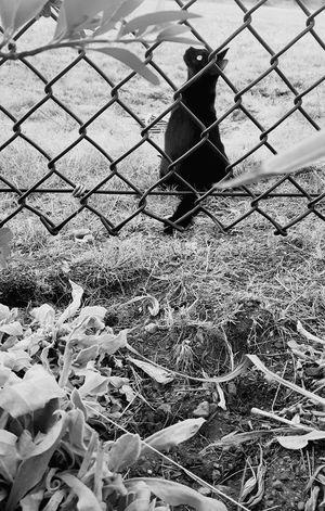 BLackCat Cat Blackandwhite Animal Outside