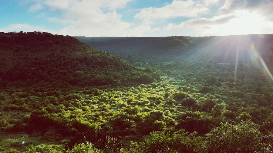 South Africa Ohrigstad Forest Forest Photography Wildlife Sunrise Sunrise And Clouds Waterhole Travel Travel Photography Nature Nature Photography Naturelovers Sunbeam Beauty In Nature Sky Scenics Outdoors No People Green Green Nature Growth Tree Iketla Lodge