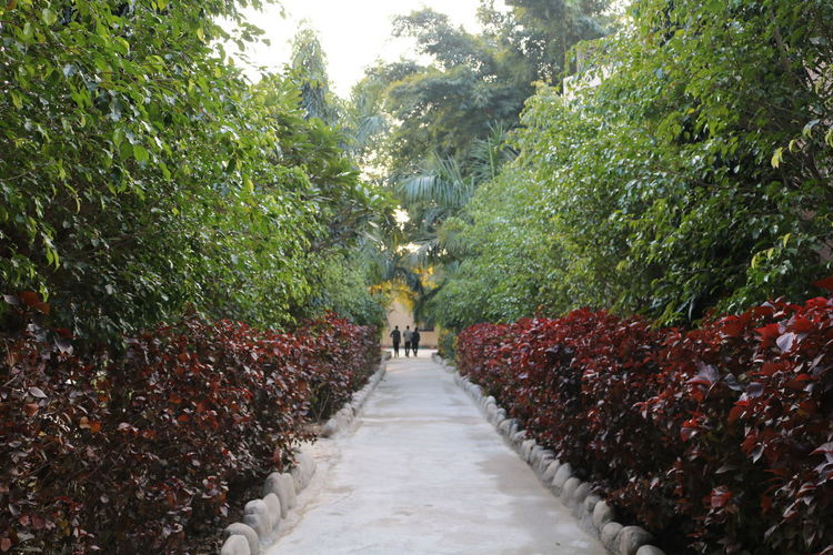 Rear view of people walking on footpath amidst trees in park