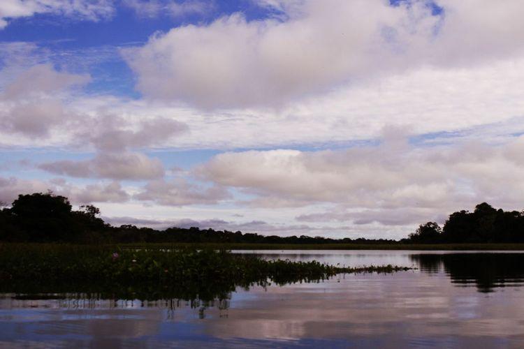 Amazonas Amazonas Reflection The Great Outdoors - 2017 EyeEm Awards Lake Tree Water Nature Outdoors Sky Beauty In Nature Tranquility No People Scenics Forest Day The Great Outdoors - 2017 EyeEm Awards
