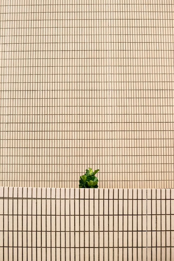 No People Food And Drink Wellbeing Nature Copy Space Still Life Pattern Day Grid Close-up Building Exterior Plant Minimalism