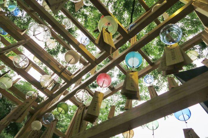 Wind Bell Festival Summer Sunnertimes Shrine EyeEm Selects Eye4photography  EyeEmBestPics EyeEm Gallery Nature Tree Trees Tradition 風鈴 氷川神社 川越 Tokyo,Japan