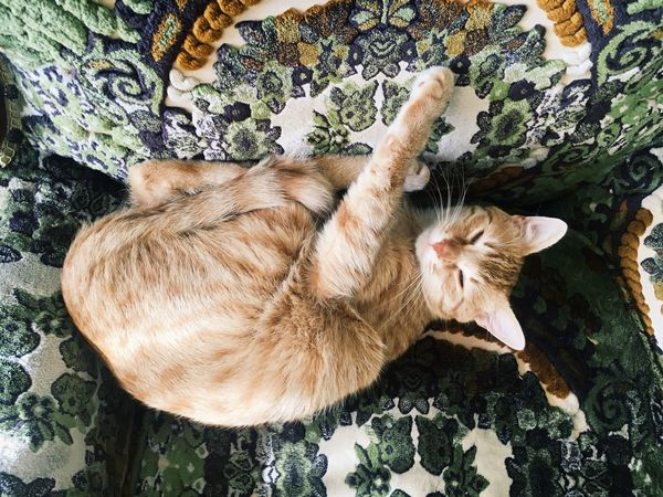 my boy Vscgood Vscocam EyeEm EyeEm Nature Lover Sleeping Beauty Sleeping Cat Sleepy Love Yellowcat Sweet Baby Yellowflower Animal Animal Themes One Animal Mammal Vertebrate Domestic Pets High Angle View Cat Relaxation Day Whisker Plant Domestic Cat