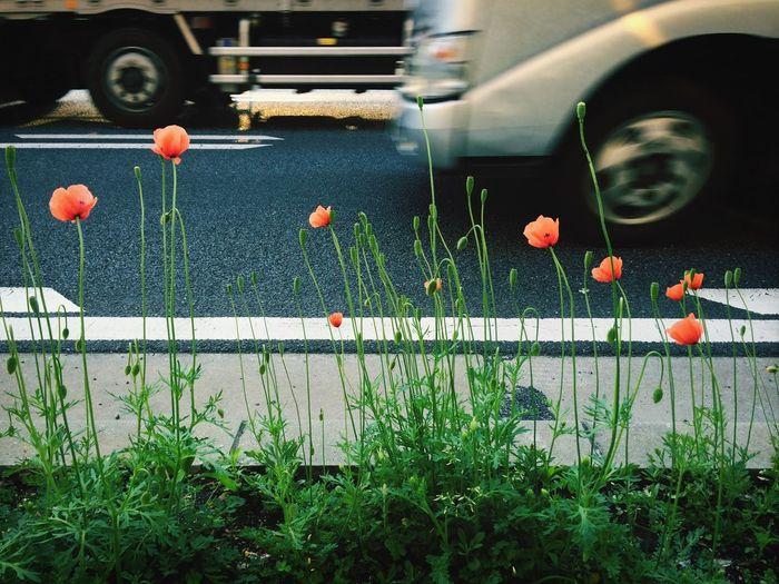 Urban Nature Street Photography Happy