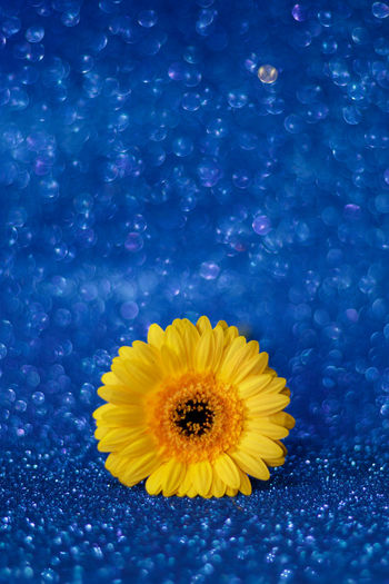 Close-up of yellow flower against blue water