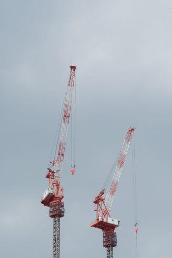 Cranes hanami.