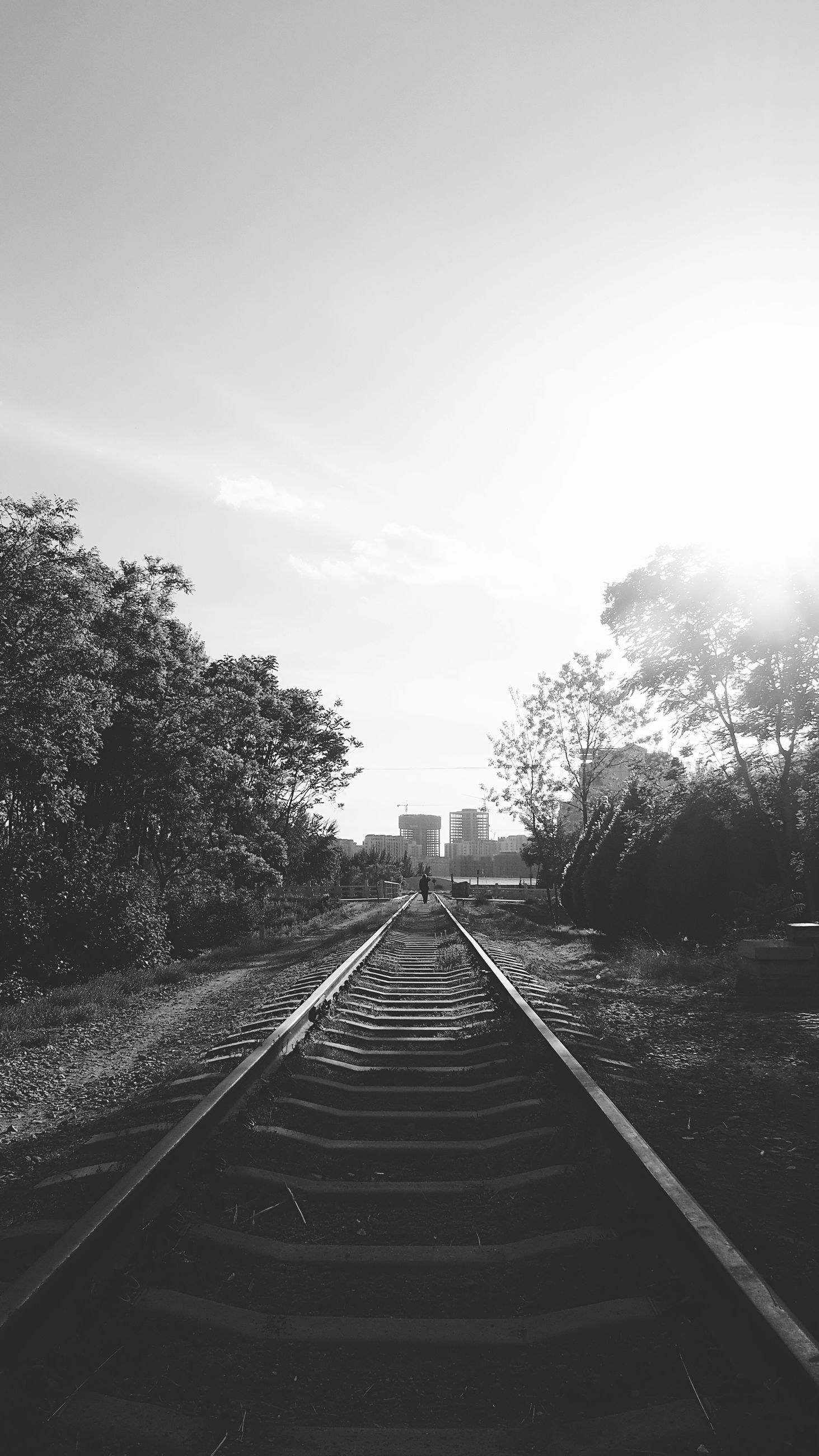 the way forward, sky, tree, railroad track, diminishing perspective, vanishing point, transportation, railing, clear sky, built structure, sunlight, day, nature, outdoors, architecture, growth, no people, tranquility, steps, field