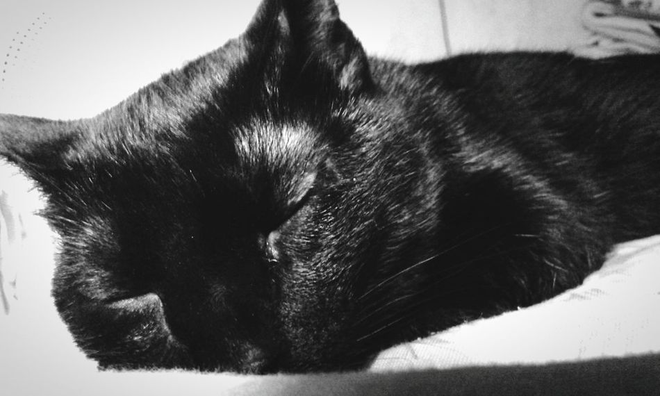 Mycat♥ Myblackcat Black & White Bnw_friday_eyeemchallenge Bnw_friday_challenge Monochrome Light And Shadow