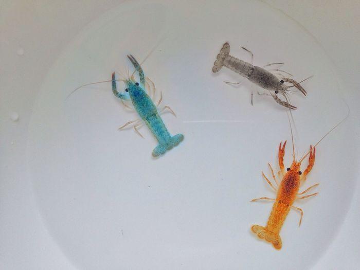 |• หยิน-หยาง •| ... 🌱 Animal Themes Wildlife Animals In The Wild One Animal Indoors  Zoology No People Large Group Of Objects Studio Shot Vscocam