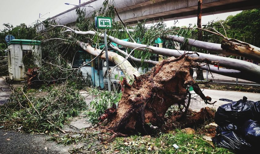 Aftermath Urban Street Mangkhut Typhoon Documentary Journalism Journalist Photojournalism Aftermath Tree Collapsed Typhoon Hong Kong Disaster Natural Disaster Tree Hanging Drying Sky Street Scene Parking Vehicle