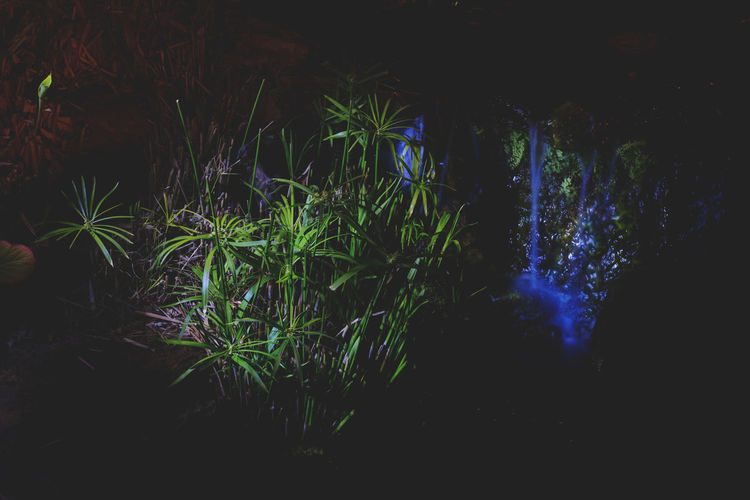 Moon Nights Sydney Darkness Growth MoonNights Nightphotography Tranquility Beauty In Nature Botanical Contrasting Colors Dark Beauty Darkness And Light Haunting  Lightpaint Longtimeexposure Mysterious Nature Night Nightscape Pond Life Tranquil Scene Water Plant Waterfall