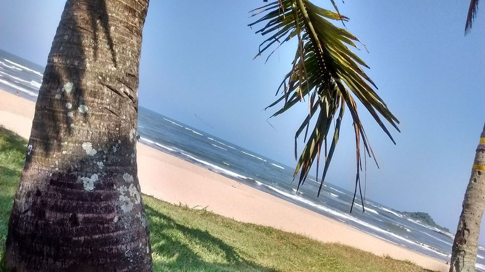 Palm Tree Tree Sky Sunlight Water Day Nature Outdoors Clear Sky Growth Tree Trunk Scenics Sea No People Beach Lush - Description