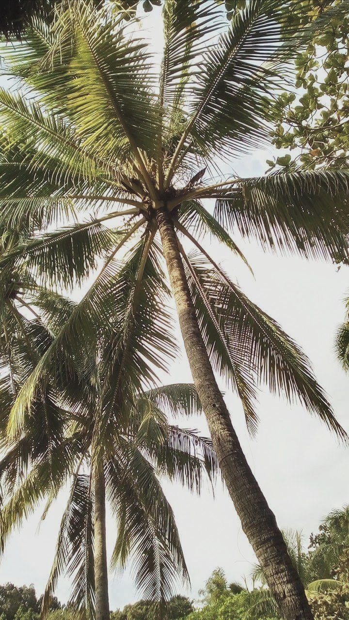 palm tree, tree, low angle view, nature, tree trunk, beauty in nature, day, outdoors, tranquility, scenics, no people, sky, growth, tranquil scene, full frame, backgrounds, close-up