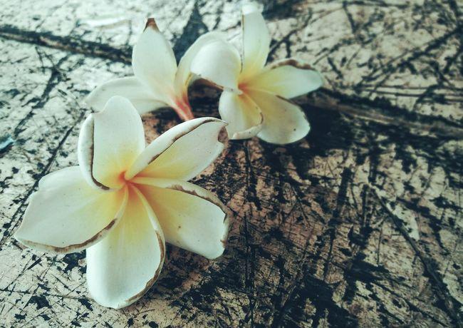 Flowers Wounds Dark