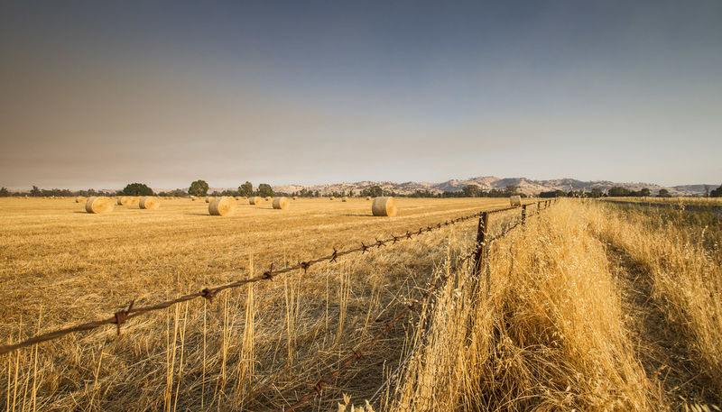 Bushfire sky, Gundagai NSW Agriculture Bushfire Cereal Plant Clear Sky Crop  Day Farm Hay Horizontal Landscape Nature No People Outdoors Rural Scene Sky Tranquil Scene Tranquility Wheat Wildfire
