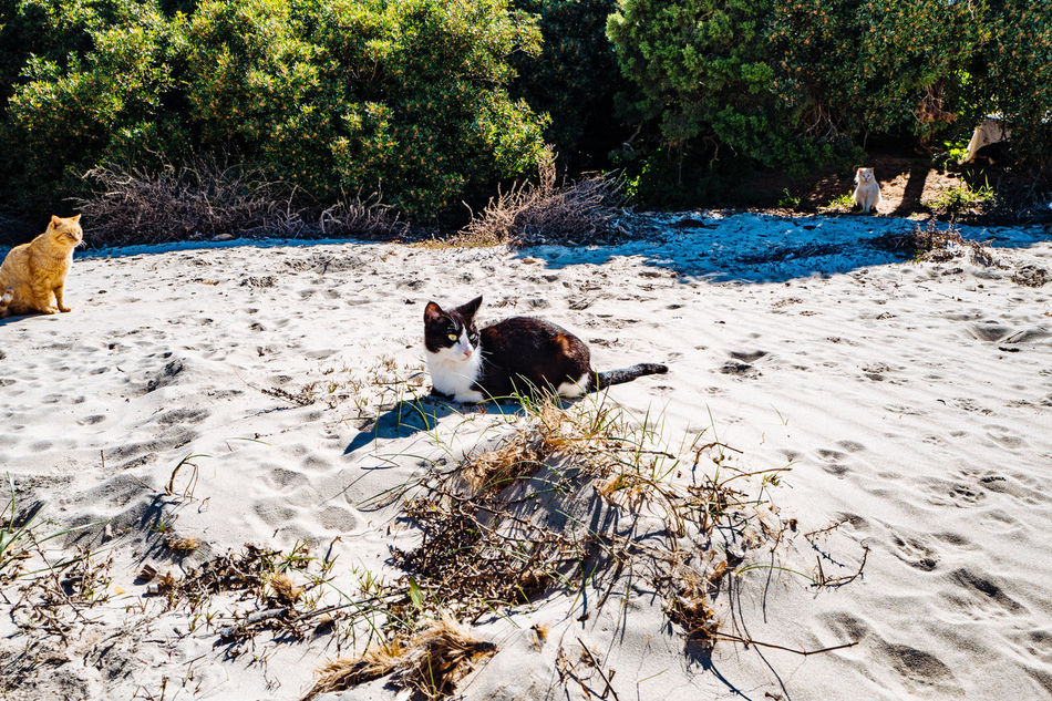 Animal Themes Beach Day Dog Domestic Animals Mammal Nature No People One Animal Outdoors Pets Tree