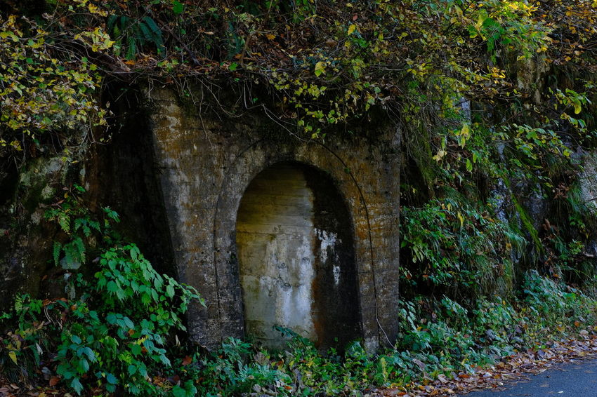 Old Ruin Old Coal Mine Nostalgia Nostalgic  Street Streetphotography Tree Arch Architecture Built Structure Plant Ruined The Past