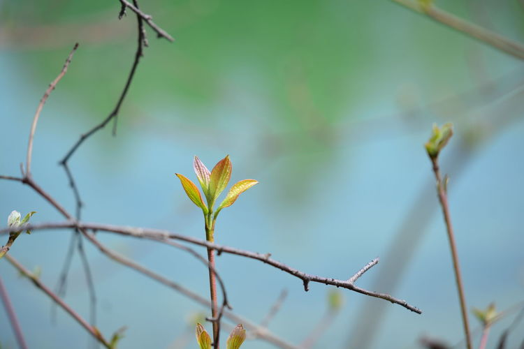Plant Growth Beauty In Nature Focus On Foreground Plant Part Close-up Leaf No People Nature Day Plant Stem Flowering Plant Flower Fragility Outdoors Vulnerability  Selective Focus Branch Twig Freshness Flower Head