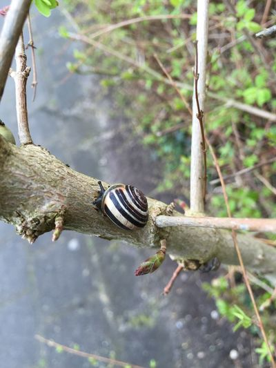 Nature Snail climbing To The Top Eye4photography  Check This Out Walking Around