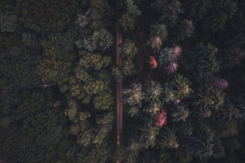 Full frame shot of flowers in forest