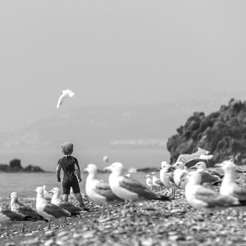 Animal Themes Beach Beauty In Nature Bird Black And White Black And White Photography BYOPaper! Child Day Full Length Horizon Over Water Leisure Activity Live For The Story Nature One Person Outdoors Real People Scenics Sea Seagulls Sky The Great Outdoors - 2017 EyeEm Awards Water