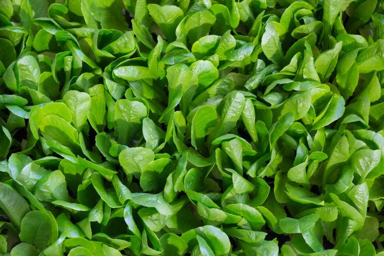 Full Frame Shot Of Spinach