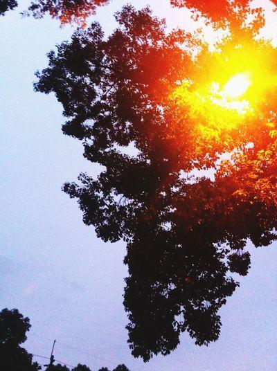 有的时候路灯就是太阳