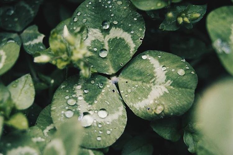 ✖ 3/4 of luck ✖ 📷 Sony Alpha 58 🌍 Kallmuth, Bavaria, Germany ➡ @felixschmidt21 Luck Water Drops Trefoil Nature Outdoors Explore Adventure Vibes Mood Wanderlust Roadtrip Travel Journey Stayandwander Grtakeover Weroamgermany Visualizegermany 99percentlifestyle Asotravel Justefe_FEATURES Folkscenery Triggerfeature Straytocreate Vscocam lm28 fs21