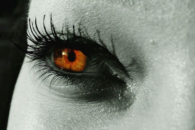 Close-up Eyesight Human Eye Eyelash Isolated Color Extreme Close-up Focus On Foreground Eyebrow Iris - Eye Eyeball Orange Color