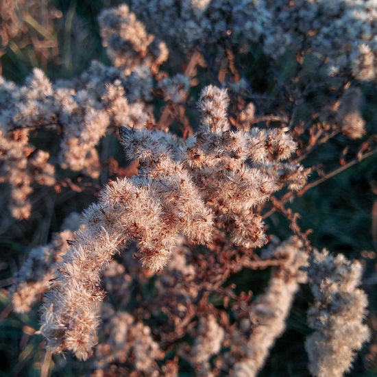 Close-up of plant on snow covered land
